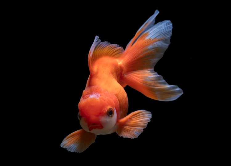 How to find more time to write. Goldfish looking at you.